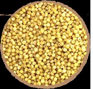 Graines de Millet Mon Panier Sans Gluten Bio