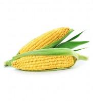 Amidon de maïs 250g